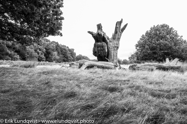 For some reason there was a lot of Dead Trees in Richmond Park.