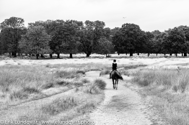 Woman on a horse in Richmond Park.